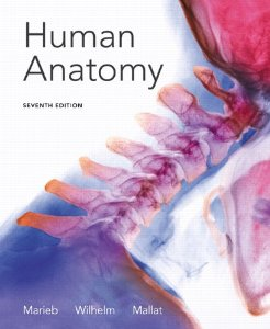Test Bank for Human Anatomy, 7th Edition : Marieb