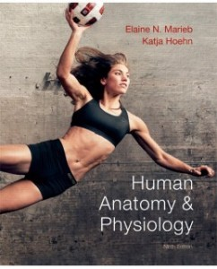 Test Bank for Human Anatomy and Physiology, 9th Edition: Elaine N. Marieb