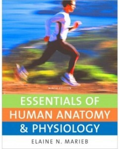 Test Bank for Essentials of Human Anatomy and Physiology, 9th Edition: Elaine N. Marieb