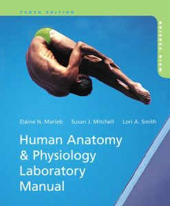 Test Bank for Human Anatomy & Physiology Laboratory Manual 10/E 10th Edition Elaine N. Marieb, Susan J. Mitchell, Lori A. Smith
