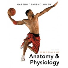 Solution Manual for Essentials of Anatomy & Physiology Plus MasteringA&P with eText — Package, 6/E – Frederic H. Martini & Edwin F. Bartholomew